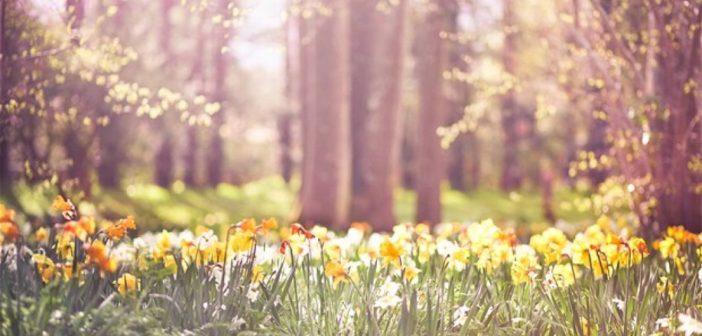 Prvi dan proljeća i to dan ranije